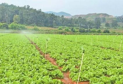 昆明晋宁 打造品牌蔬菜 勇闯海外市场